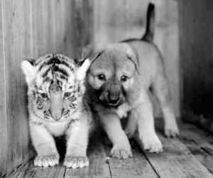 animal and puppy image