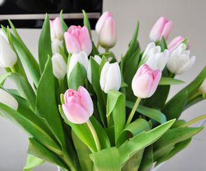 flowers, tulips, and pink image