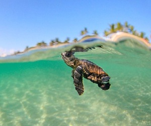 turtle, sea, and beach image