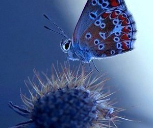butterfly, blue, and nature image
