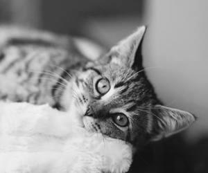 blackandwhite, cat, and kitten image
