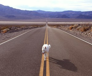 road, way, and wolf image