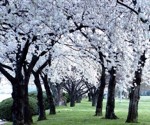 blossom, garden, and japan image