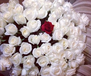 beauty, roses, and wow image