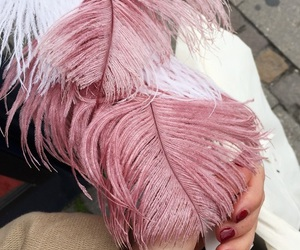 feathers, interior, and pink feathers image