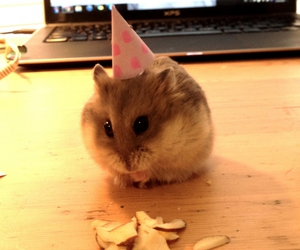 animals, celebrate, and food image