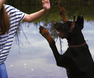 doberman, dog, and dober image