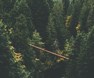forests, photography, and nature image