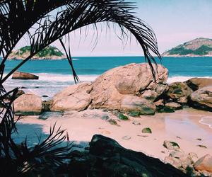 summer, beach, and animal image