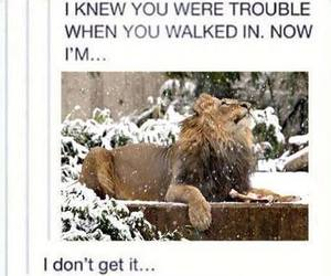 funny, lion, and Taylor Swift image