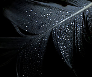 feather and black image