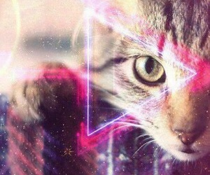 cat, hipster, and triangle image