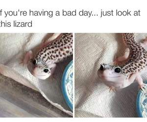 cute, lizard, and funny image
