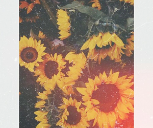 sunflowers and love image