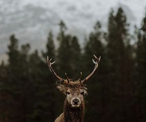 deer, love, and hipster image