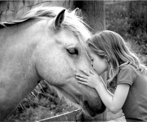 horse, kiss, and animal image