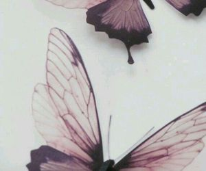 butterfly, background, and purple image