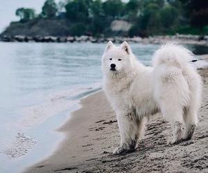 dog, amazing, and animal image