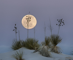 moon, beach, and pale image