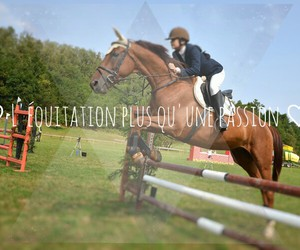 equitation, passion, and ♡ image