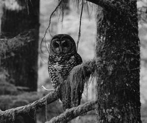 owl, animal, and forest image
