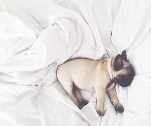 bed, cute, and animal image