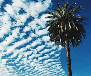 palms image
