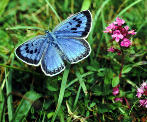 flower, blue, and butterfly image