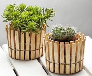 creative, diy, and plantas image