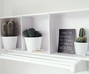 cacti, home, and decoration image