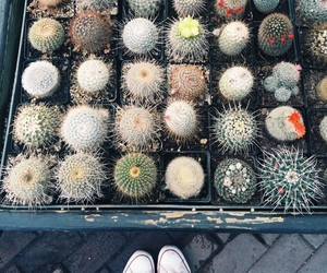 cactus, grunge, and hipster image