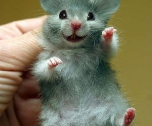 mouse, animal, and funny image