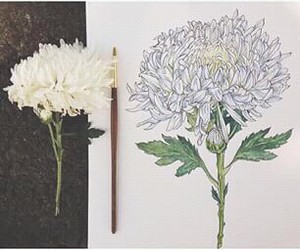 art, draw, and flower image