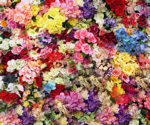 flowers, background, and floral image