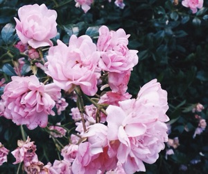 beautiful, flowers, and nature image