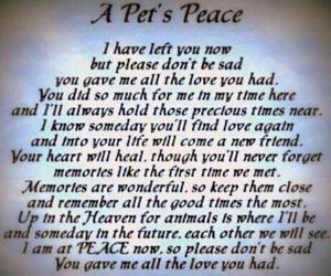 pet and sad image
