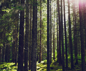 amazing, sun, and trees image