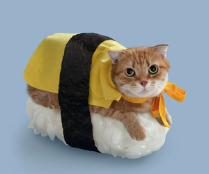cat and sushi image