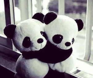 panda, hug, and black and white image