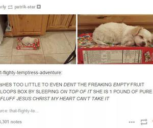 fluffy, funny tumblr post, and Fruit Loops image