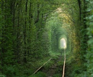tunnel, nature, and green image