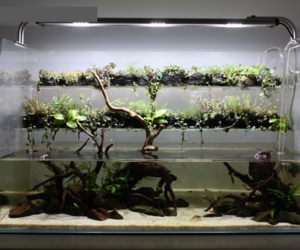 aquarium and aquascaping image