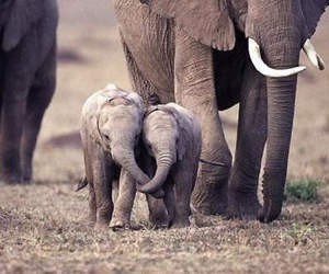 elephant, cute, and animal image