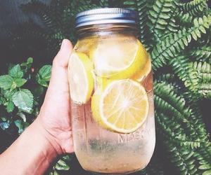 beverage, mandarin, and forest image