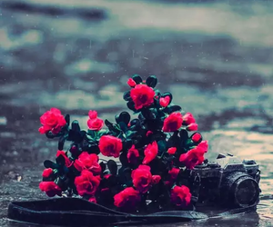 flowers, camera, and rain image