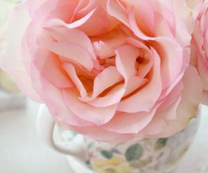 feminine, flowers, and shabby chic image