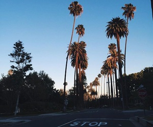 california, morning, and palm trees image