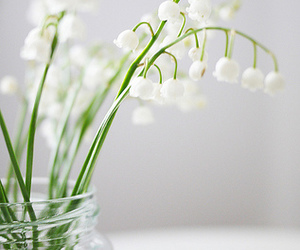 flowers, lily of the valley, and white image
