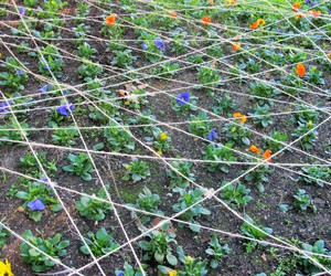 blue, flowers, and net image