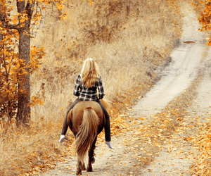 horse, autumn, and fall image